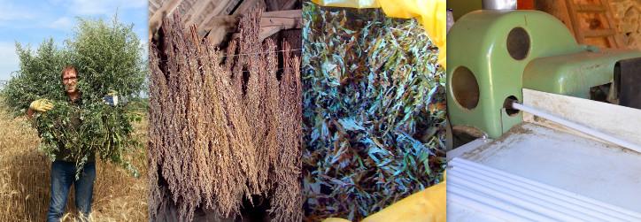 Crop-dry-leaf-prod